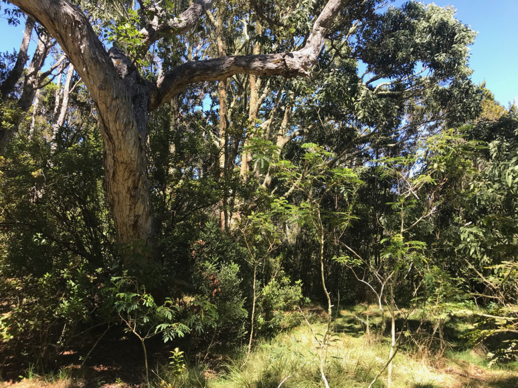 New paper in Molecular Ecology on changes in arbuscular mycorrhizal fungi in a forest restoration project on Hawaii Island